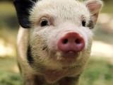 Animal-eating denial