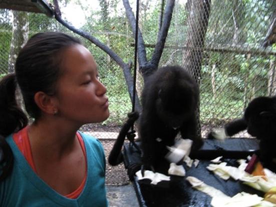 baby howler monkey guatemala